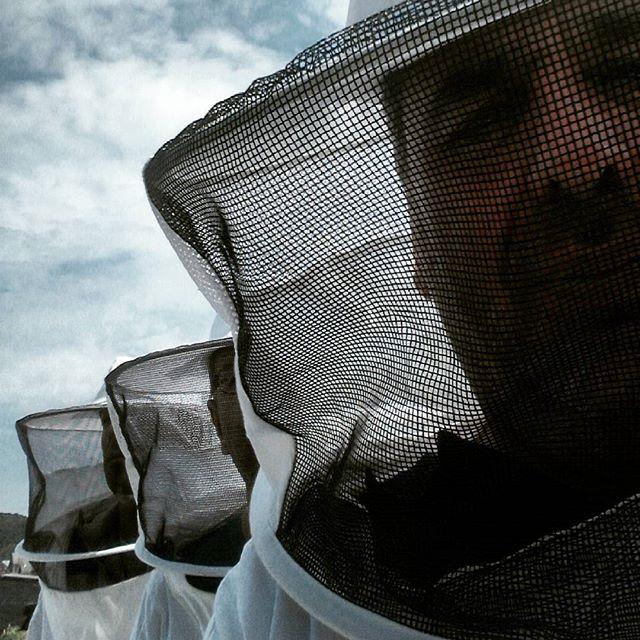 abeilles_ (1)
